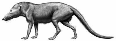 Pakicetus depiction