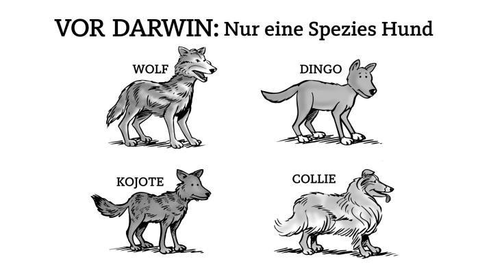 Hund spezies