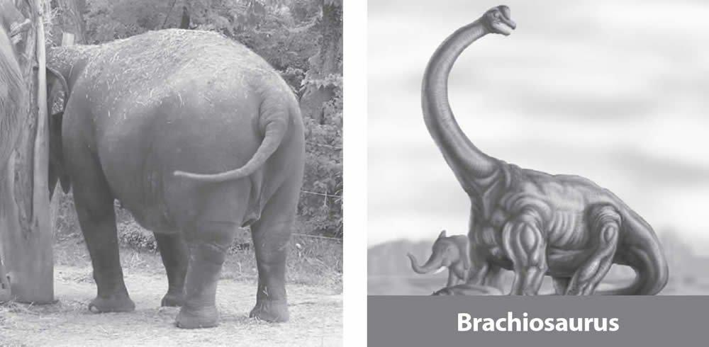 Braqiosaurio