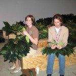 Volunteers-working-on-tree-.jpg