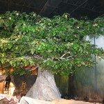 Tree-of-Life-LJ-2-28-07-027.jpg