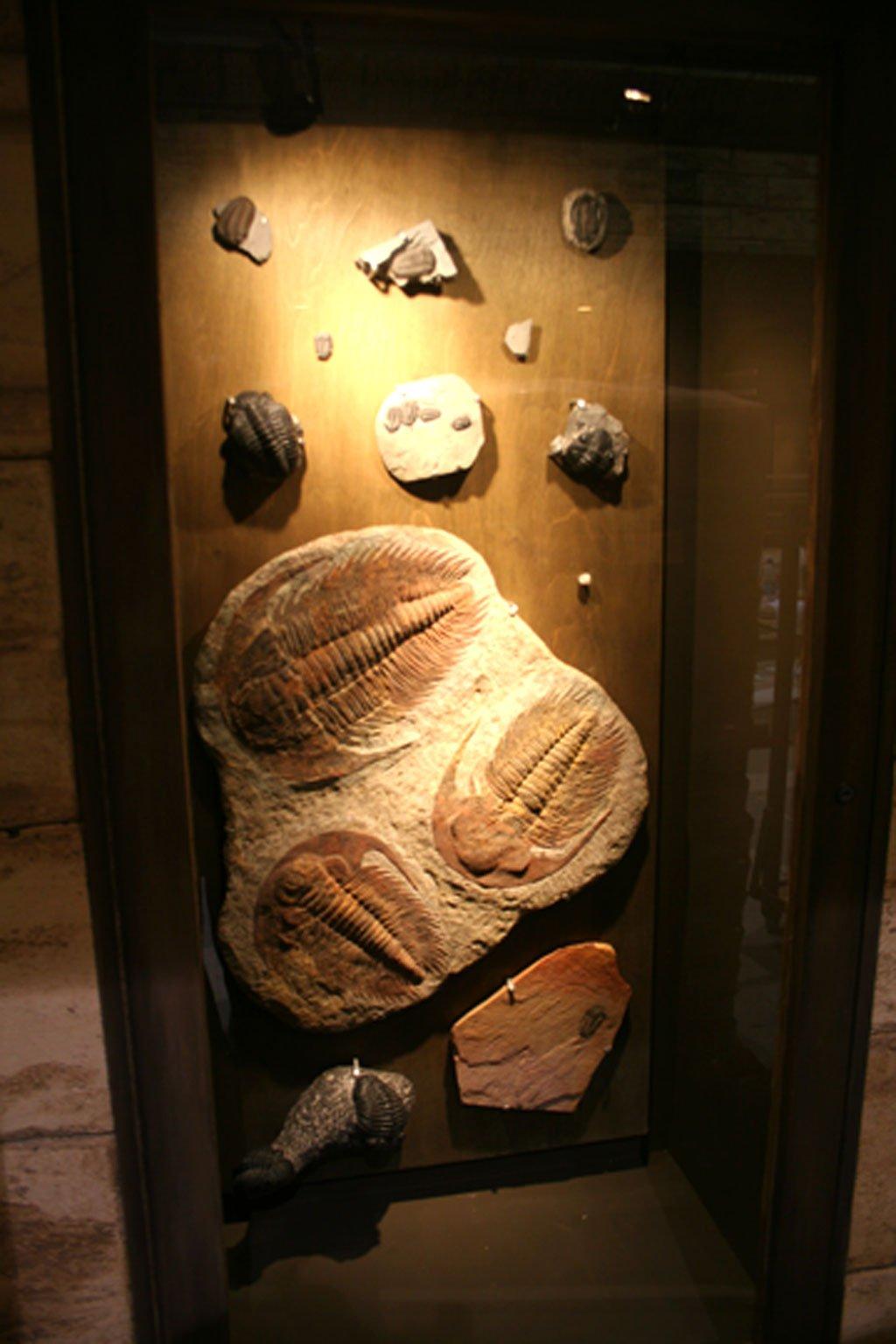 fossils-plaza-4-22-07.jpg