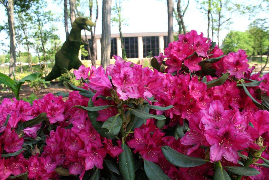 flowers-5-12-07-201.jpg