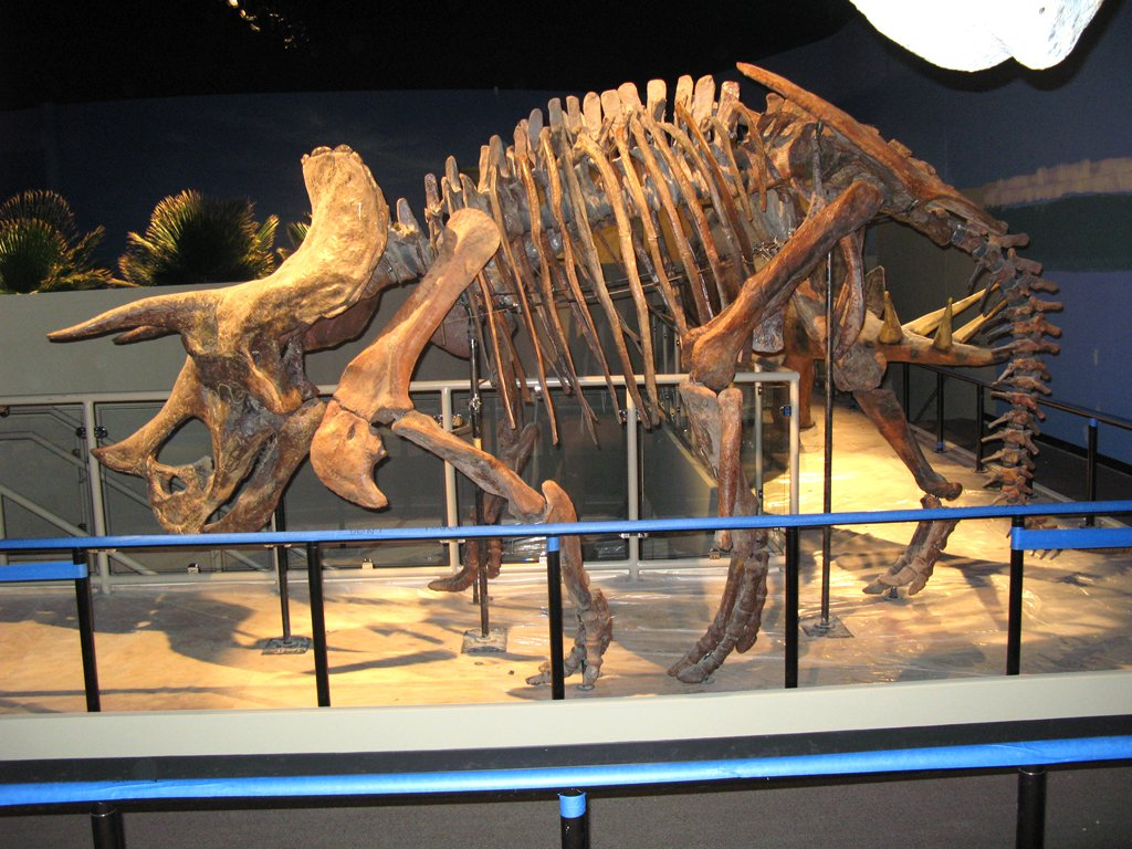 triceratops-skeleton-6-6-07.jpg