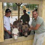 men-with-donkeys