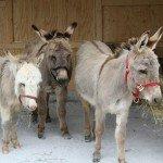 donkeys-delivered