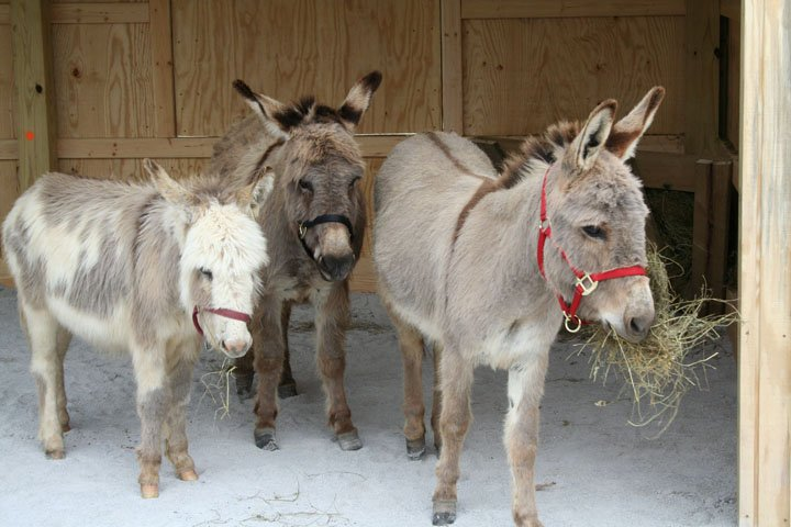 donkeys-delivered
