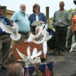 doves-released-2