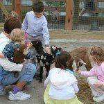 children-at-petting-zoo