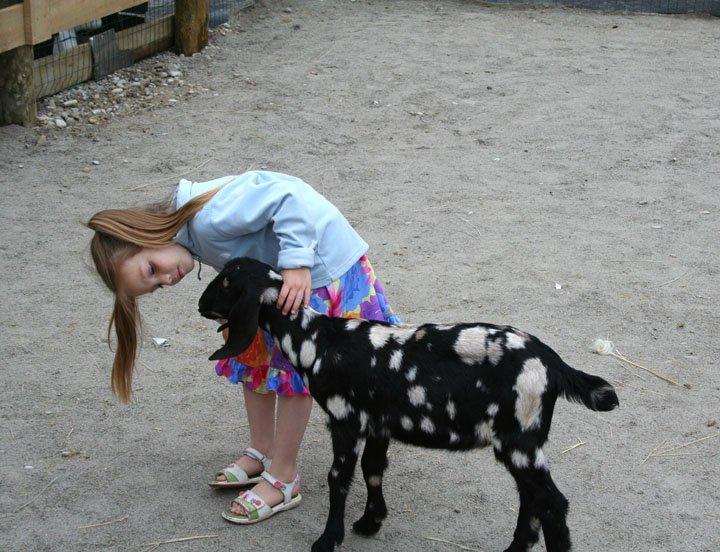 petting-zoo-goat