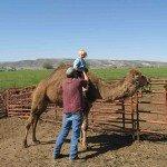 gomer-the-camel.JPG
