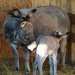 petting-zoo-birth-6-19-08-045.jpg