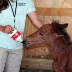 petting-zoo-update-6-18-08-036.jpg