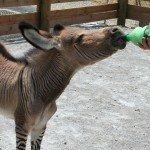 petting-zoo-update-6-18-08-048.jpg