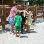 petting-zoo-update-6-18-08-086.jpg
