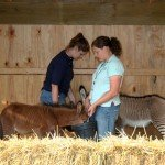 zonkey-zorse-feed-6-28-08-034p.jpg