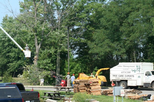tree-cutting-n-more-9-3-08-012.jpg