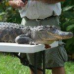 dan-breeding-gator-10-13-08-343.jpg