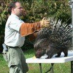 dan-breeding-porcupine-10-13-08-291.jpg