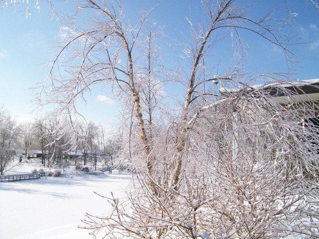 snow-january-085.jpg