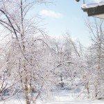 snow-january-088.jpg