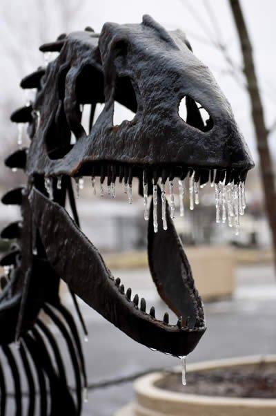 Winter around the Creation Museum