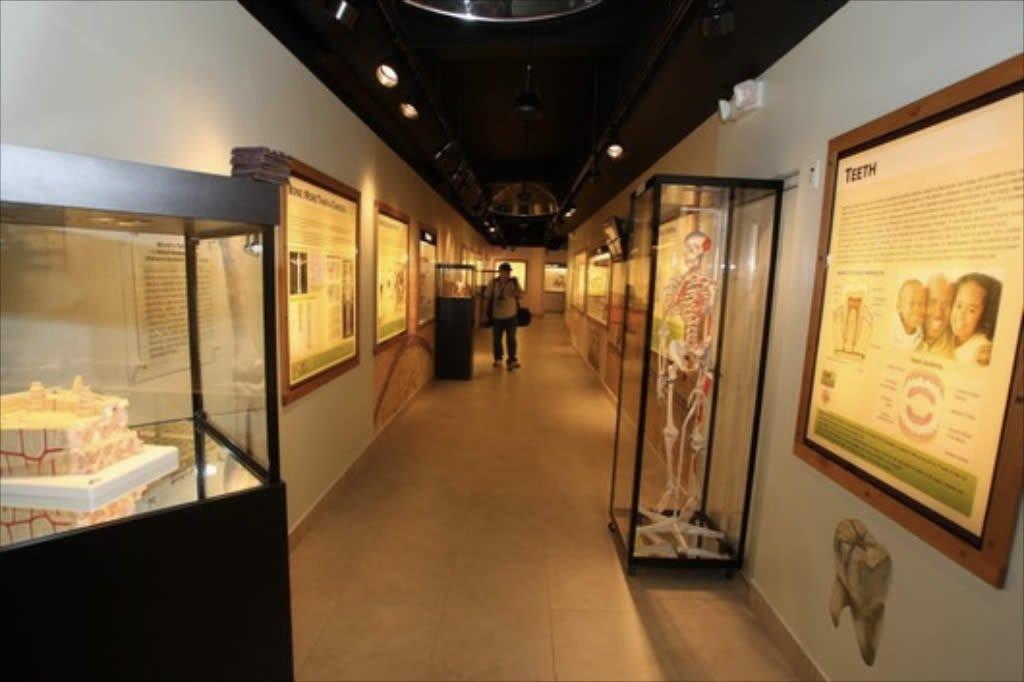 Anatomy Exhibit