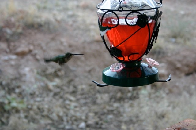 hummingbirds-1