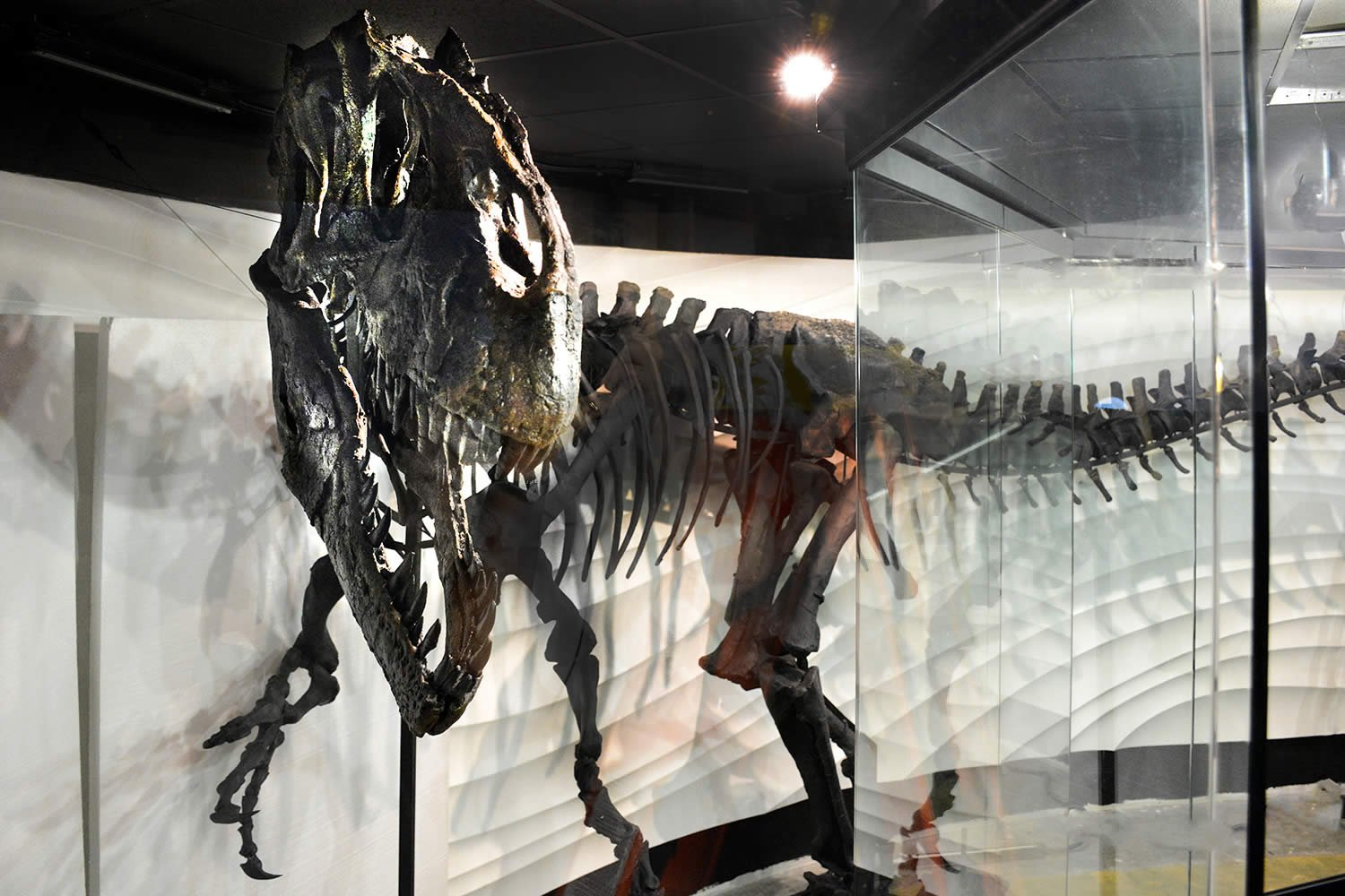 New 1 5 million exhibit opens at creation museum Dinosaur museum ohio