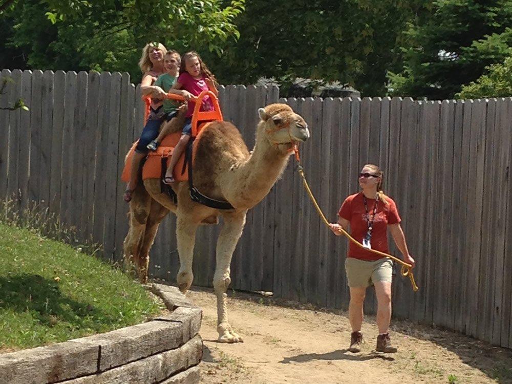 Riding CJ the Camel