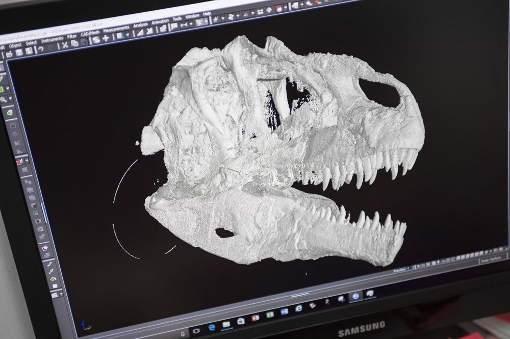 Scan of Allosaur Skull