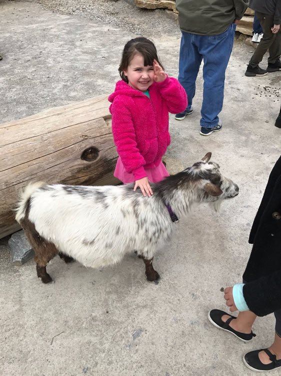 Goat at Ararat Ridge Zoo