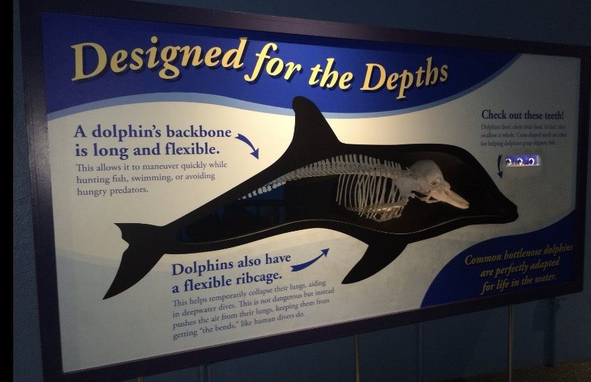 Dolphin: Designed for the Depths