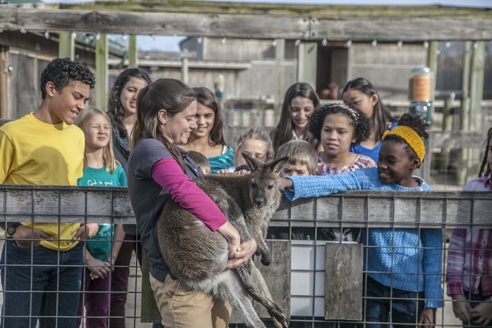 Students with a wallaby at Creation Museum petting zoo