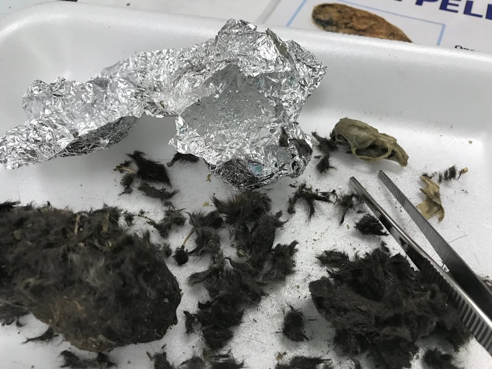 Dissecting Owl Pellets at the Explore Camp