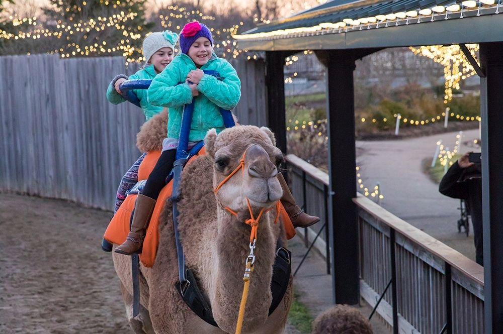 ChristmasTown Camel Rides