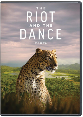 The Riot and the Dance DVD