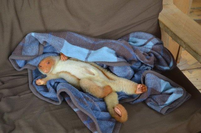 Newt in blanket