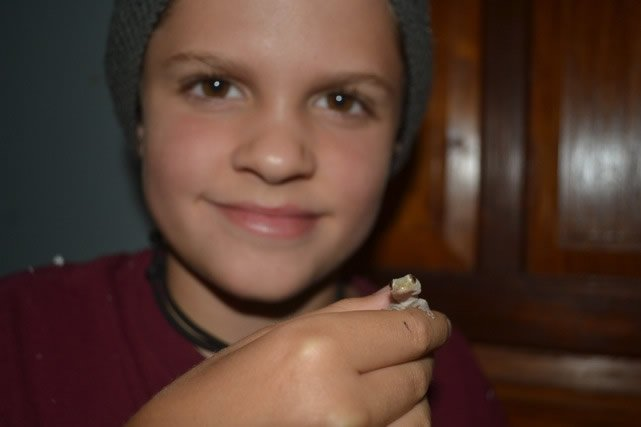 Asher Holding Gecko