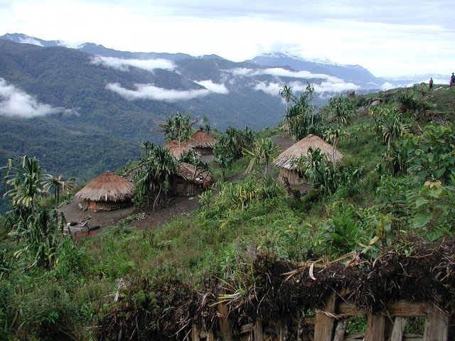 Houses in the jungle