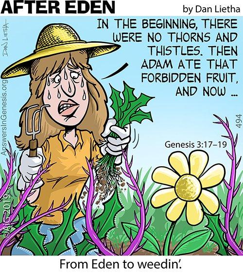 After Eden 494: Eden to Weedin'