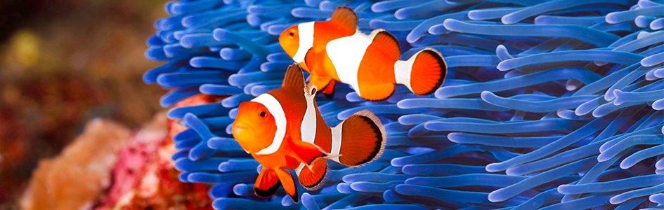 Designing Nemo