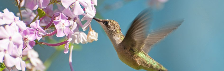 The Hummingbird Gods Tiny Miracle Answers In Genesis