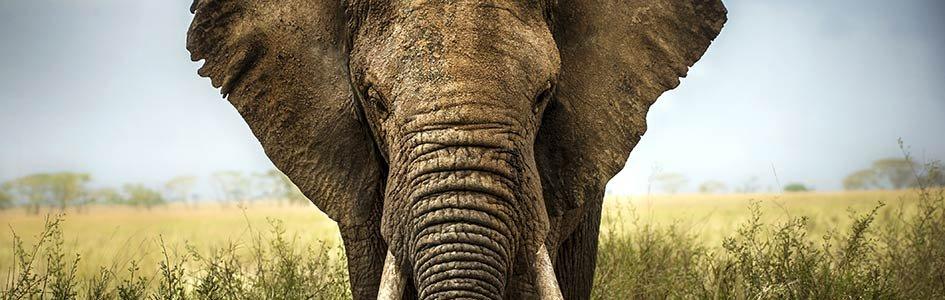 Defining Species—An Elephant-Sized Problem
