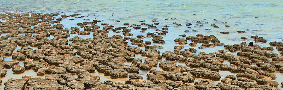 Stromatolites—Rare Reminders of a Lost World