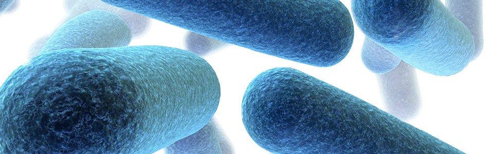 antibiotic resistant bacteria essay