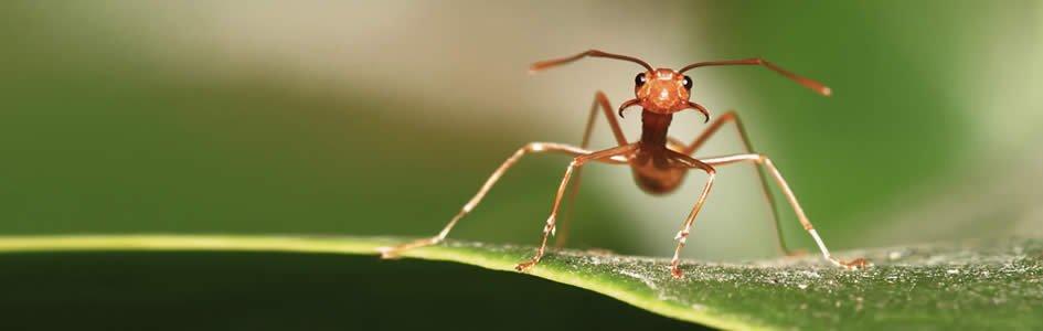 Ants—Millimeter Messengers