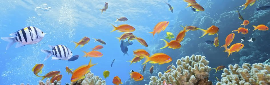 "How ""Evolution"" Might Save Coral Reefs"