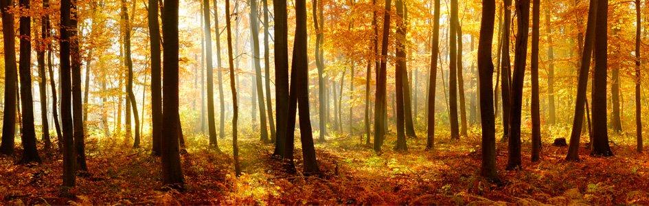 Arbor Day: Celebrating God's Design for Trees