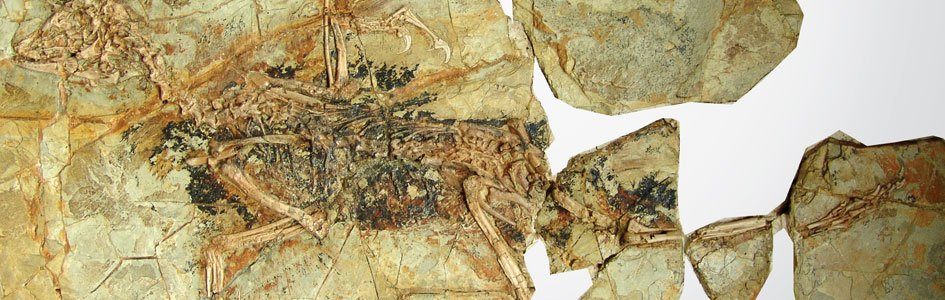 Archaeopteryx Has Flown the Coop